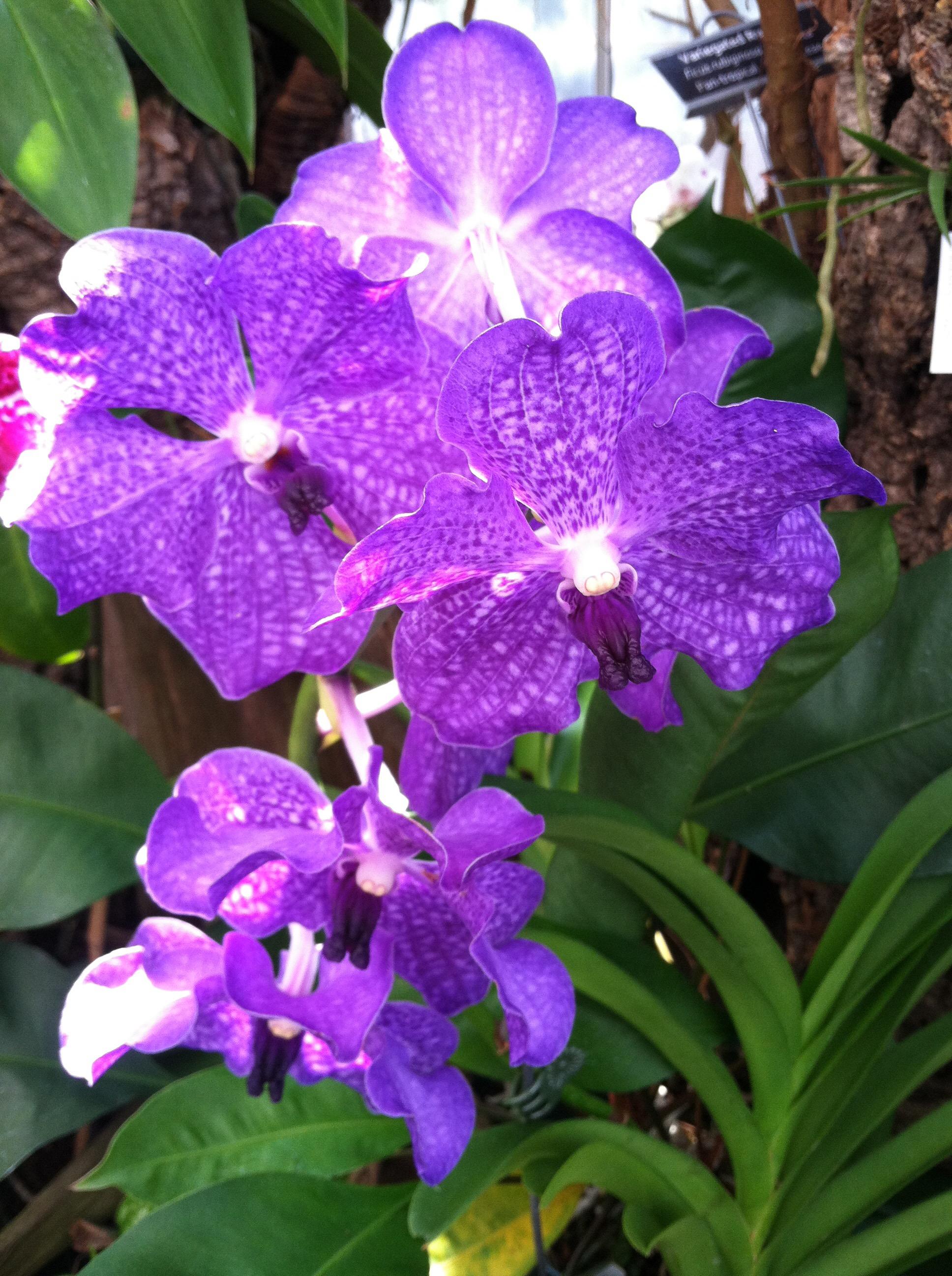 Strange Places: UNC Charlotte Botanical Gardens